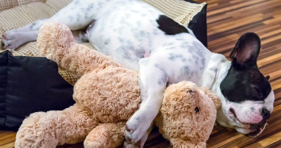 Sleeping Dog with Stuffed Bear